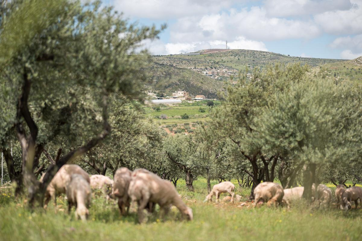 The village of Yanoun (centre) sits on a hillside in the Nablus Governorate of the West Bank. The village is surrounded on three sides by Israeli settlements. Photo: Albin Hillert/WCC