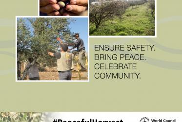 Social media card showing olive harvest