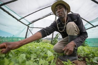 A farmer tends to his crops in Thaba Bosiu, Lesotho. © Albin Hillert/WCC