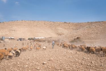 A shepherd herds his sheep in the Jordan Valley, West Bank, 2018. Photo: Albin Hillert/WCC